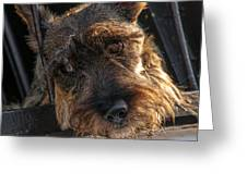 Scottish Terrier Closeup Greeting Card by Jess Kraft