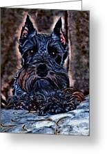 Scottish Terrier Greeting Card by Tisha McGee
