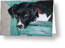 Scout Greeting Card by Michele Turney