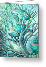 Sea Folk II - Parrot Fish Greeting Card by Nancy Tilles