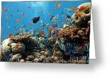 Sea Life Greeting Card by Boon Mee