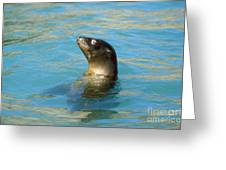 Sea Lion Greeting Card by James L. Amos