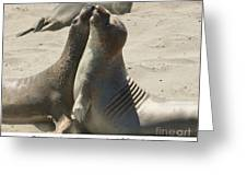 Sea Lion Love from the book MY OCEAN contact Laura Wrede to purchase this print Greeting Card by Artist and Photographer Laura Wrede