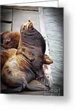 Sea Lion Greeting Card by Robert Bales