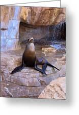 Sea Lion Greeting Card by Viktor Savchenko