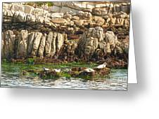 Sea Lions In Monterey Bay Greeting Card by Artist and Photographer Laura Wrede