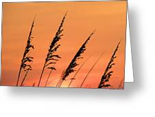 Sea Oat Sunset Greeting Card by JC Findley