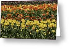 Sea Of Tulips Greeting Card by LeeAnn McLaneGoetz McLaneGoetzStudioLLCcom