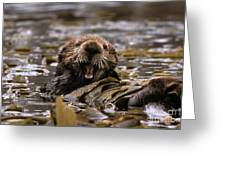 Sea Otters Greeting Card by Ron Sanford