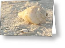 Sea Shells Greeting Card by Kim Hojnacki