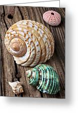 Sea Shells With Urchin  Greeting Card by Garry Gay