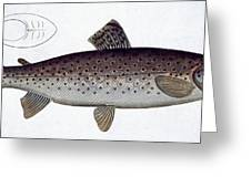 Sea Trout Greeting Card by Andreas Ludwig Kruger