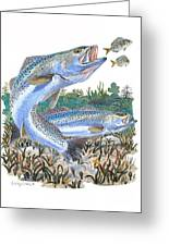 Sea Trout Greeting Card by Carey Chen