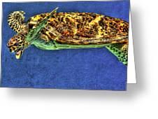 Sea Turtel Greeting Card by Karen Walzer