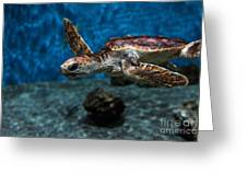 Sea Turtle 5d25083 Greeting Card by Wingsdomain Art and Photography