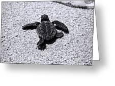 Sea Turtle Greeting Card by Sebastian Musial