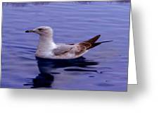 Seagull In Blue Greeting Card by Sakna T