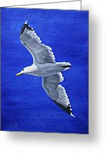 Seagull In Flight Greeting Card by Crista Forest