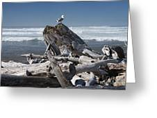 Seagull On Oregon Coast Greeting Card by Peter French