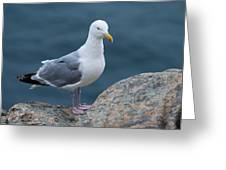 Seagull Greeting Card by Sebastian Musial