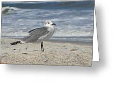 Seagulls At Fernandina 2 Greeting Card by Cathy Lindsey