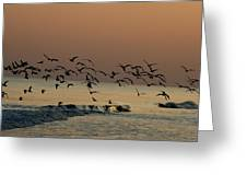 Seagulls Feeding At Dusk Greeting Card by Beth Andersen
