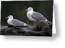 Seagulls Greeting Card by Gary Langley
