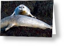 Seal Massage 5662 Greeting Card by Brent L Ander