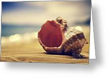 Seashell in the sand  Greeting Card by Jelena Jovanovic