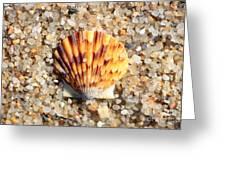 Seashell On Sandy Beach Greeting Card by Carol Groenen