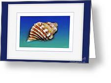 Seashell Wall Art 1 - Blue Frame Greeting Card by Kaye Menner
