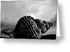 Seashell Without The Sea 2 Greeting Card by Bob Orsillo