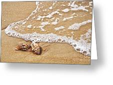 Seashells And Lace Greeting Card by Kaye Menner