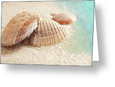 Seashells In The Wet Sand Greeting Card by Sandra Cunningham