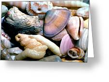 Seashells Puerto Rico Greeting Card by Thomas R Fletcher