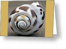 Seashells Spectacular No 2 Greeting Card by Ben and Raisa Gertsberg