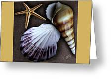 Seashells Spectacular No 37 Greeting Card by Ben and Raisa Gertsberg