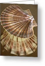Seashells Spectacular No 54 Greeting Card by Ben and Raisa Gertsberg