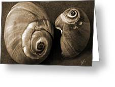 Seashells Spectacular No 6 Greeting Card by Ben and Raisa Gertsberg