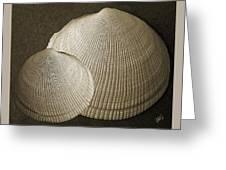 Seashells Spectacular No 8 Greeting Card by Ben and Raisa Gertsberg