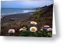 Seaside Daisies On Moonstone Beach Greeting Card by Kathy Yates