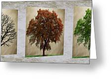 Seasons Triptych Greeting Card by Cheryl Young