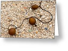 Seaweed and Sand - Jewels of the Ocean Greeting Card by Artist and Photographer Laura Wrede
