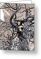 Sedona Arizona Ghost Tree In Black And White Greeting Card by Gregory Dyer