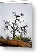 Sedona Landscape Vii Greeting Card by Dave Gordon