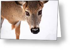 Seeing Into The Eyes Greeting Card by Karol  Livote