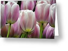Seeing Pink Greeting Card by Penny Lisowski