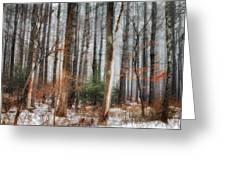 Seeing The Trees Thru The Forest Greeting Card by Bill  Wakeley
