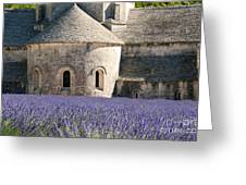 Senanque Lavender Greeting Card by Bob Phillips