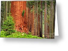 Sequoias Greeting Card by Inge Johnsson